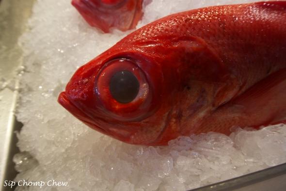 SCC Fish Eye